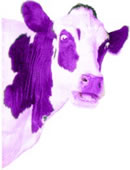 Seth Godwin's Purple Cow